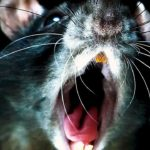 Soundtrack, Tráiler – Rats (Documental)