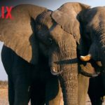 Soundtrack, Tráiler – El Exterminio del Marfil (The Ivory Game), Documental