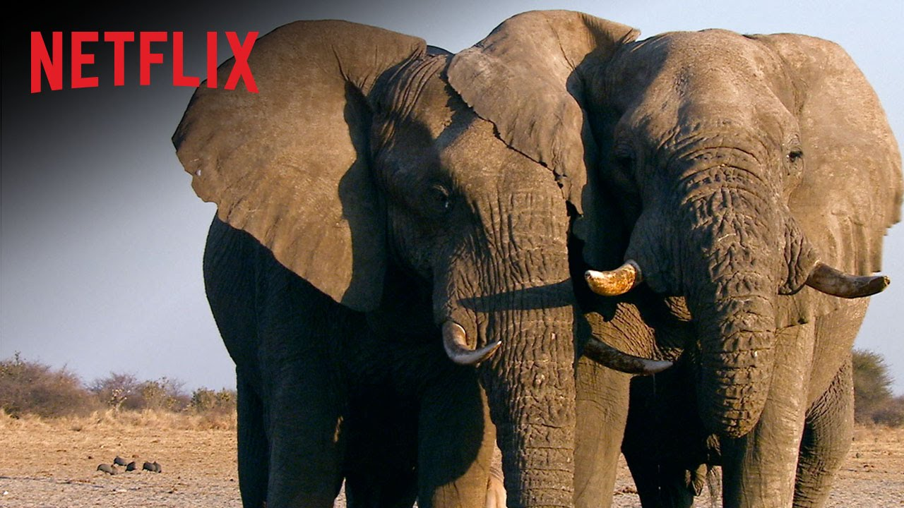 Soundtrack, Tráiler – El Exterminio del Marfil (The Ivory Game), Documental