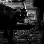 Canis (Cortometraje) – Soundtrack