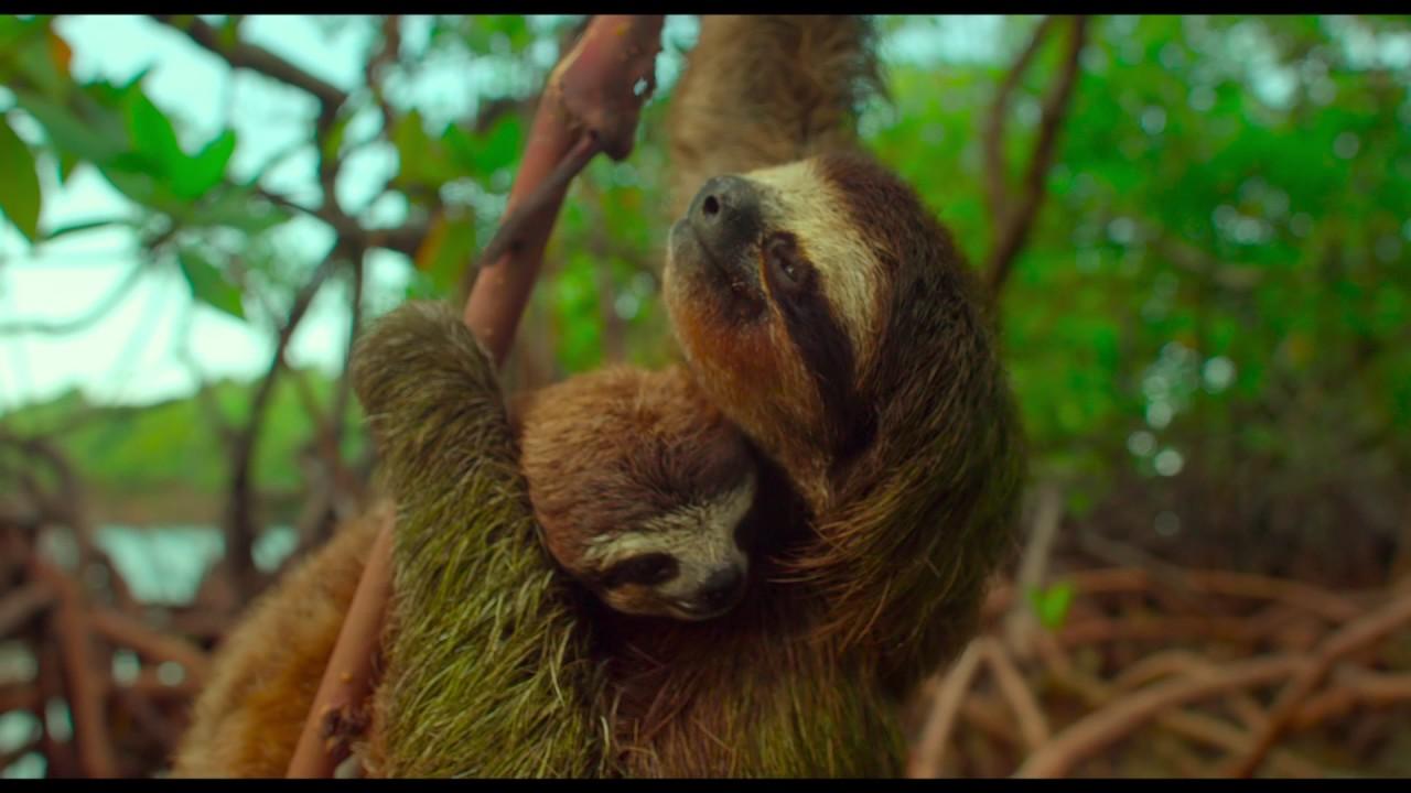 Un Día Maravilloso en la Tierra (Earth: One Amazing Day), Documental – Soundtrack, Tráiler