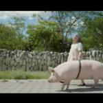 Cría Puercos – Tráiler
