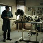 Dogman: El Despertar de la Fiera – Soundtrack, Tráiler