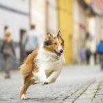 El regreso de Lassie (Lassie: Eine abenteuerliche Reise), Filme del 2020 – Soundtrack, Tráiler